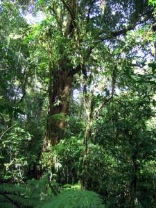 Blatt in Santa Elena